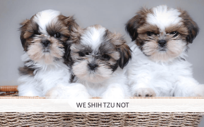 We Shih Tzu Not: Coronavirus Investing